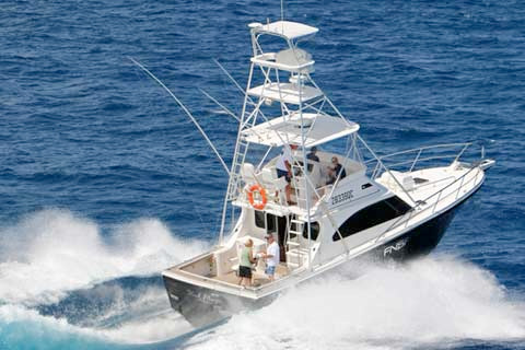 Black Marlin - FNQ Sport Fishing