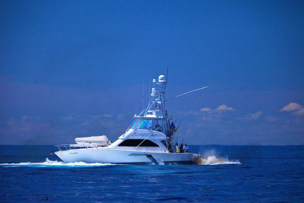marlin on diversion at port stephens