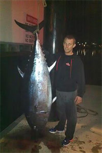 marquis bluefin tuna 146kg
