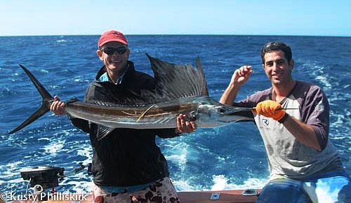 sailfish at Lucinda on Mojo