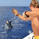 Queensland Weekender marlin
