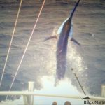 Calypso big marlin
