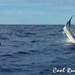 cool runnings marlin