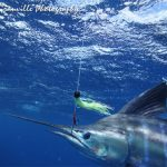 David Granville underwater marlin