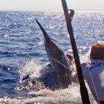 hot shot big marlin
