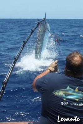 Levante 800lb black marlin