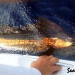 Seaward Sailfish
