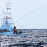 Square Bear marlin