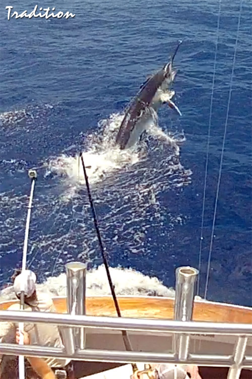 Tradition 1220 lb black marlin