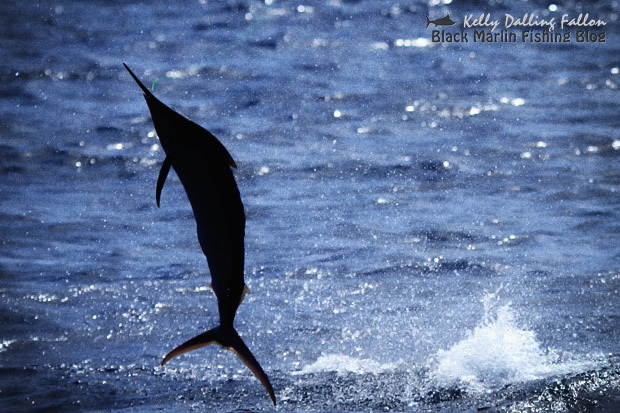 black marlin fishing blog
