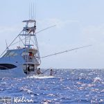 black marlin on Kalira