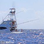 black marlin on Kalira