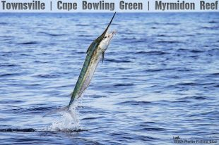 Townsville black marlin