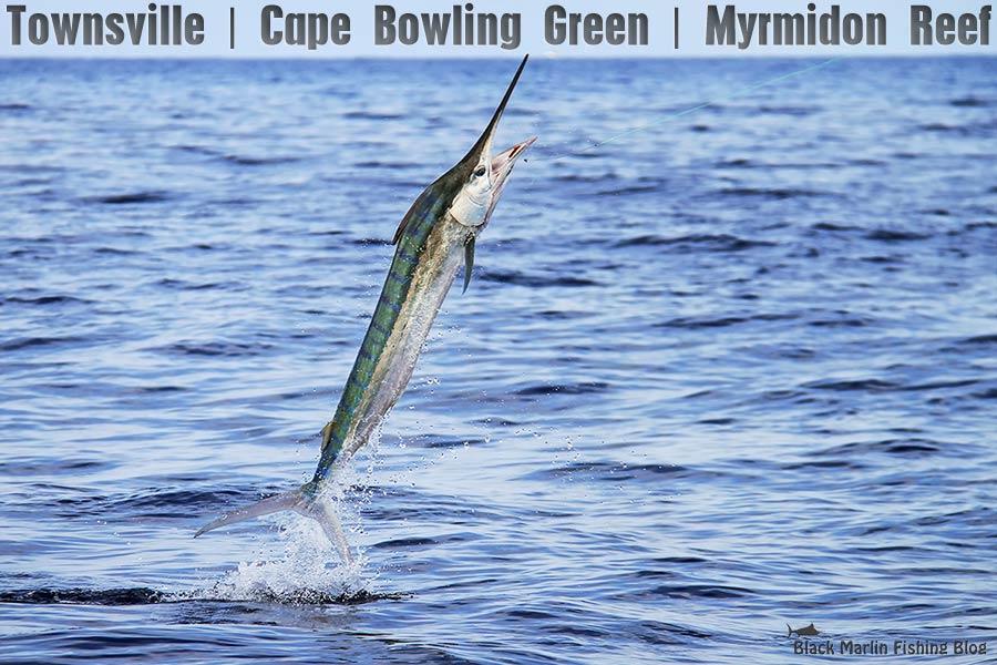 Townsville black marlin