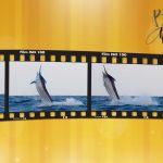 marlin desktop wallpaper