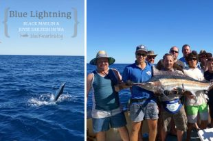Blue Lightning Marlin