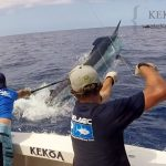 KEKOA big marlin