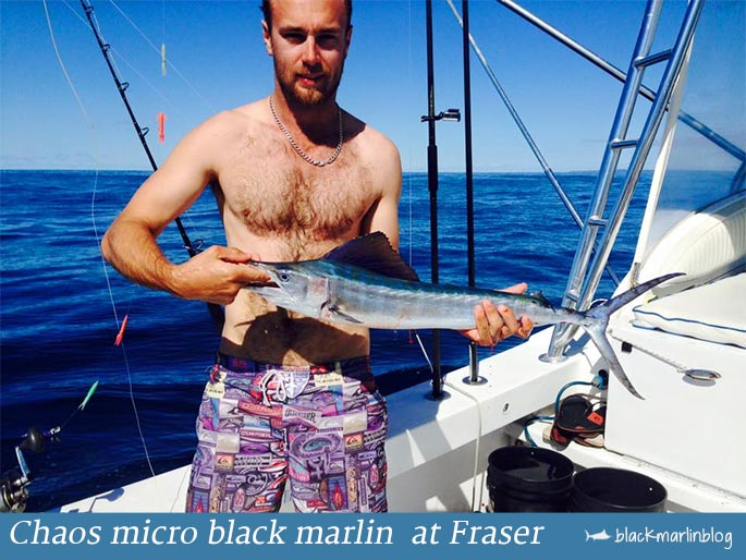 chaos-micro-black-marlin