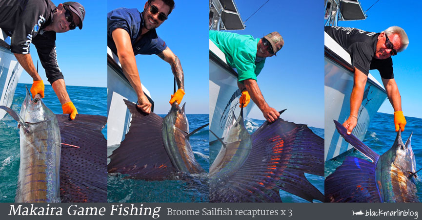 sailfish-recaptures-makaira