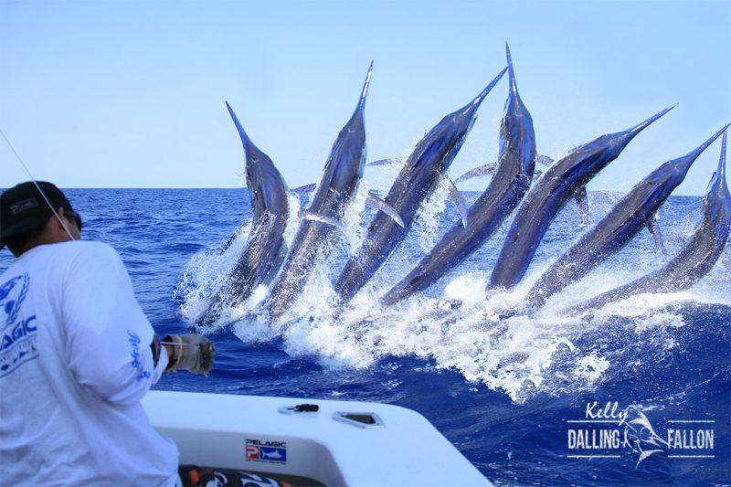 Marlin fishing images black marlin blog for Marlin fishing charters
