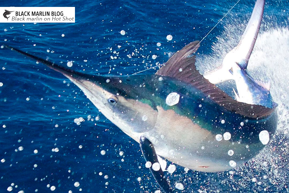 SEQ & NSW hot weekend ahead » Black Marlin Blog